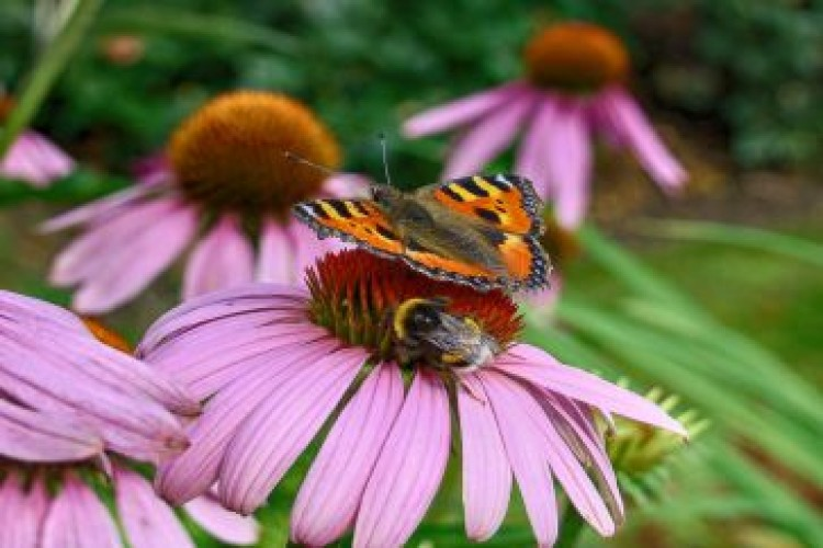 2016 LCR Web BEE AND BUTTERFLY HIGHLIGHT